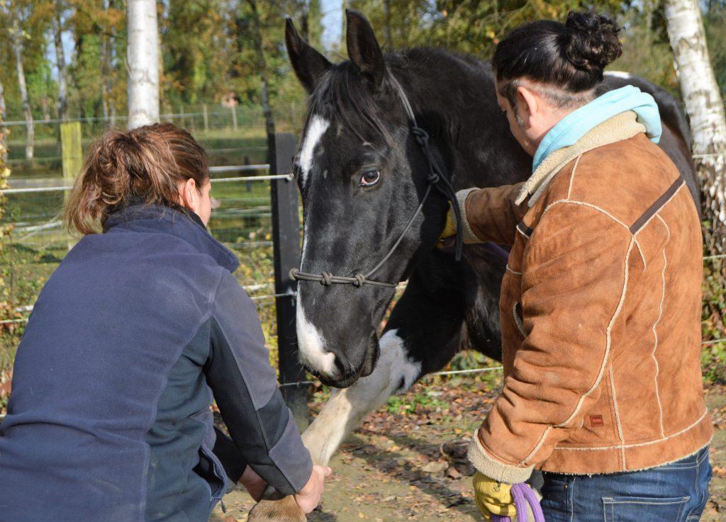 Osteopathie paard katona 2