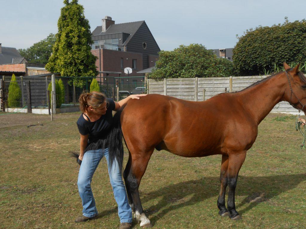 Osteopathie paard katona