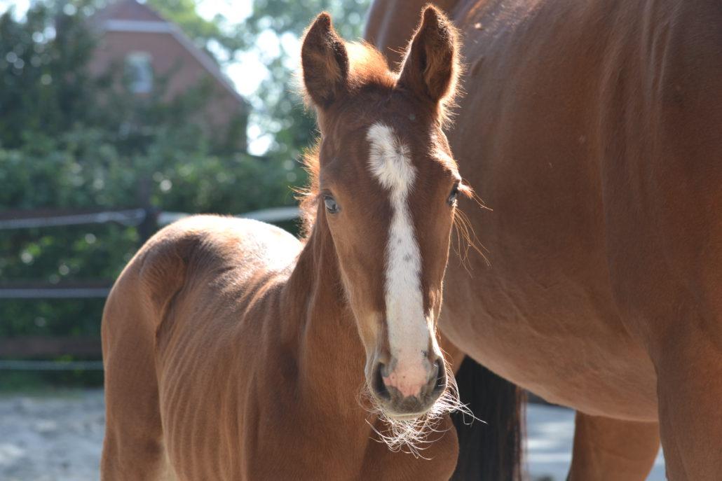 Médecine vétérinaire générale pour chevaux